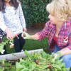 Newhall Elementary Students Plant, Harvest School Garden