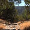 Drought May Be Bringing Bigger Animals into Santa Clarita