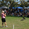 Bow Wows & Meows Pet Fair, 10-11-2015