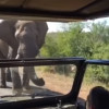 Elephant Encounter in Africa