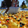 Rubber Ducks Race to Raise Money for Local Family Health
