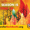 Prepare For Fire Season: Remove Dead Trees