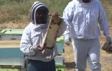 Honey Festival in Fillmore
