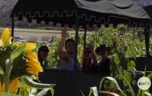 Lombardi Ranch Fall Festival