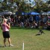 Bow Wows & Meows Pet Fair, 10-11-2015