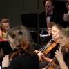 SCV Philharmonic Concert 11-19-2015