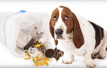 Keep Your Dogs and Cats Safe From Holiday Hazards
