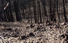 Reducing Hazards to Life, Property After a Wildfire
