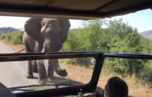 Elephant Encounter in Africa