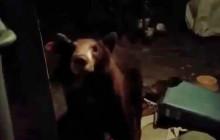 An Ursine Surprise