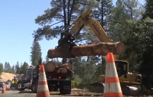 Caltrans News Flash: Clearing Dead and Dying Trees