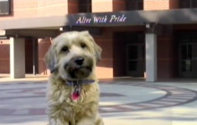 Hart TV for Friday, Aug. 26, 2016: Dog Day