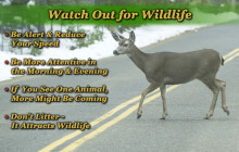 Watch Out for Wildlife Week