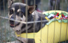 Cats, Dogs Find New Homes at Pet Fair