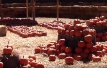 Harvest Festival & Pumpkin Patch at Gilchrist Farm, Saugus