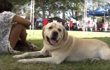Bow Wows & Meows Pet Adoption Fair at Hart Park