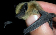Curiosity Show 7: Bats Over Los Angeles