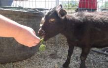 Gilchrist Family Farm
