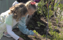 Helmers Elementary Community Garden in Action, Continuing to Grow