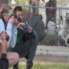 Castaic Middle School Helps Local Animal Shelter