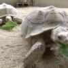 Hart Park Welcomes New Alpacas, Tortoises