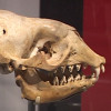 Extreme Mammals at L.A. County Natural History Museum