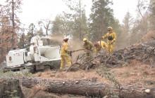 CalFire: Over 102 Million Dead Trees