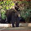 July 25, 2017: Bear Sighting, Nonprofit Merger, more