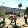 Local Tribe Building Tataviam Village at Rancho Camulos