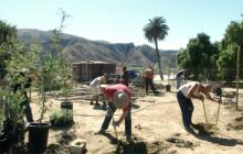 Local Tribe Building Tataviam Village at Rancho Camulos