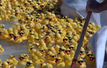 15th Annual Rubber Ducky Festival