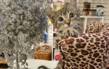 December 11, 2017: APB for Stolen Kitten; Holiday Cheer at Carousel Ranch; more