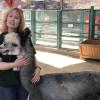 W.S. Hart Park Education Series | Alpacas