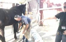 W.S. Hart Park Education Series | Farrier Shoes Horse