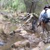 Cougar News   Volunteer Trail Restoration