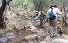 Cougar News | Volunteer Trail Restoration