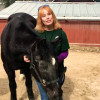 W.S. Hart Park Education Series   Meet Blackie, The 40-Year-Old Horse