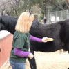 W.S. Hart Park Education Series   Grooming your Horse