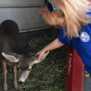 W.S. Hart Park Education Series | Deer Abby Pen