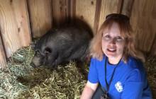 W.S. Hart Park Education Series | Pot-belly Piggy Pen