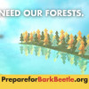 CalFire: Why Forest Health Matters