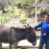 W.S. Hart Park Education Series | Meeting Half Pint the Donkey, Remembering Fritz