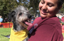 Over One Hundred Pets Adopted at Sunday's Bow-Wows & Meows Pet Fair