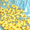 Annual Rubber Ducky Festival Sees Thousands of Ducks Race to Fund Health Services