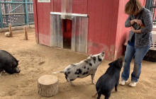 W.S. Hart Park Education Series | Piggies New Tricks