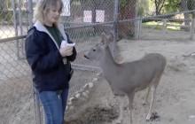Cougar News, 5-3-19 | William S. Hart Park Animal Keeper Spotlight