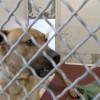 Cougar News, 5-21-19 | Castaic Animal Center