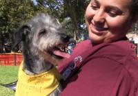 19th Annual Bow-Wows & Meows Pet Fair