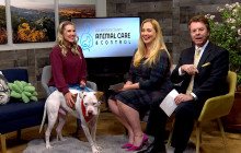 SCVTV's Community Corner Segment: Castaic Animal Care Center