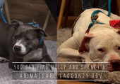 SCVTV's Community Corner Update: Molly, and Spanky still looking to get adopted!